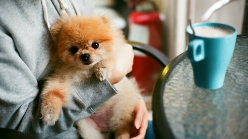 Кращі породи собак для малорухомих людей: