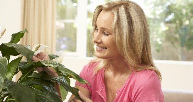 Женские комнатные цветы по фэншуй