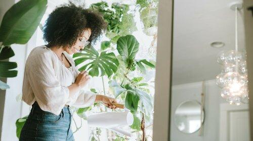 Найбільш корисні кімнатні квіти для дому
