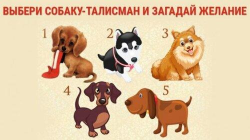 Тест-предсказание: загадай желание, а собаки скажут ответ