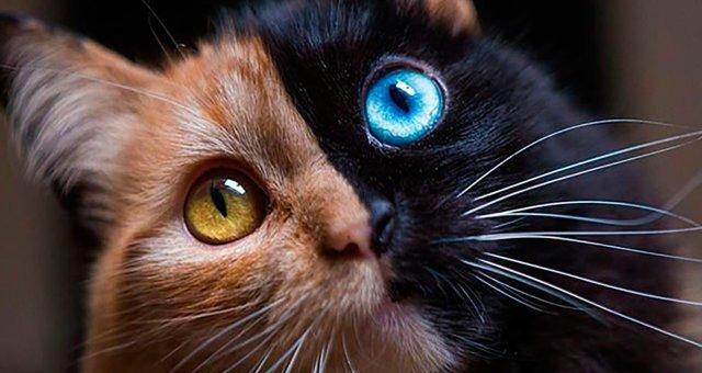 Самые уникальные кошки в мире