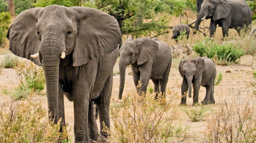 В Индии мужчина завещал 2,5 гектара земли… слонам
