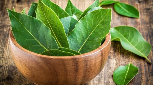Чем полезен лавровый лист: лучшие свойства ароматной специи