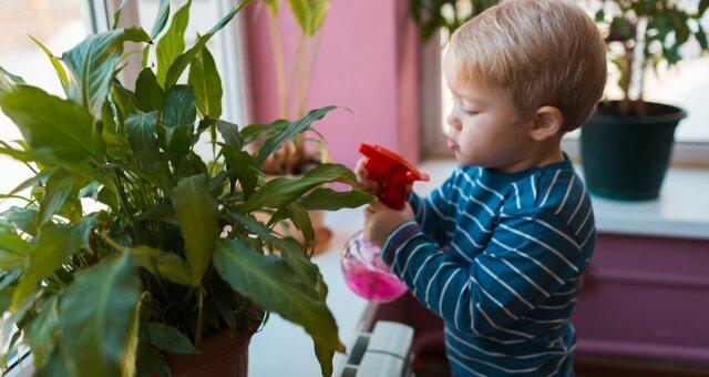 комнатные цветы, которые защитят от гриппа и простуды