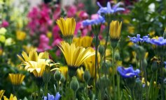 Самые красивые растения Чернобыльского заповедника: уникальные фото