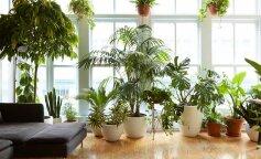способны ли комнатные цветы на самом деле очищать воздух
