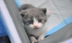 Первый клонированный кот