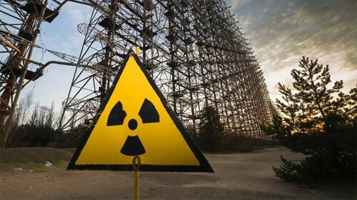 Животные в Чернобыле