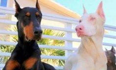 Животные-альбиносы, которым очень идет белый цвет