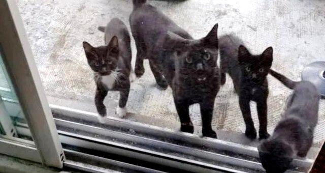 Бездомная кошка привела котят к порогу