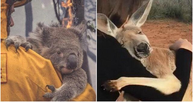 Пожары в Австралии: выжившие животные