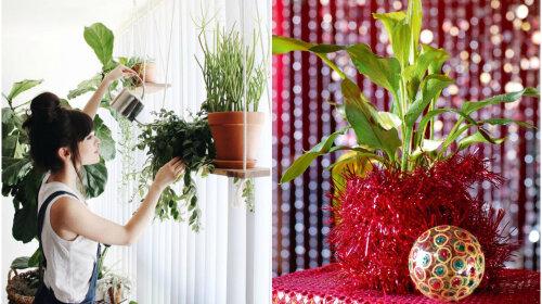 Комнатные цветы на Новый год