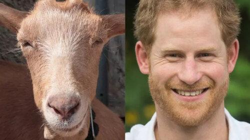 Членам королівської сім'ї знайшли двійників серед тварин – дивовижна добірка (ФОТО)