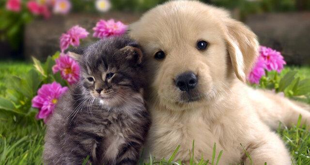 Кошка и собака дружат