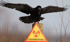 Сотрудники Чернобыльского заповедника показали фото редкостного животного, живущего в зоне отчуждения