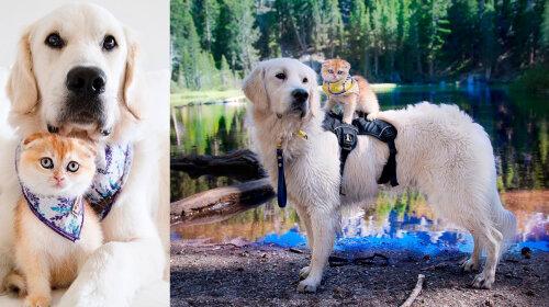 Кот и собака покорили Сеть невероятной дружбой: за парой следят десятки тысяч людей со всего мира