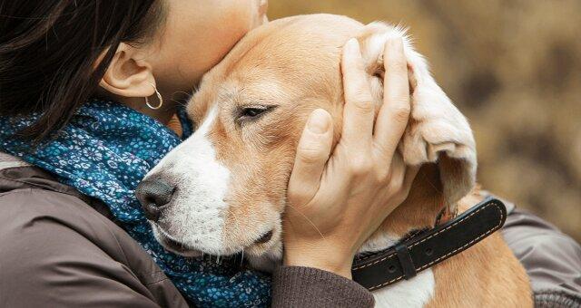 Самые верные породы собак: три собаки с развитым чувством преданности