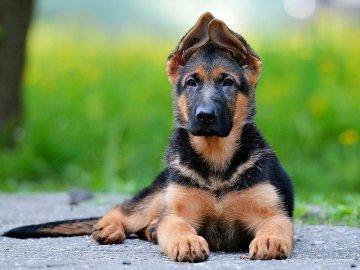 самые умные породы собак топ 100