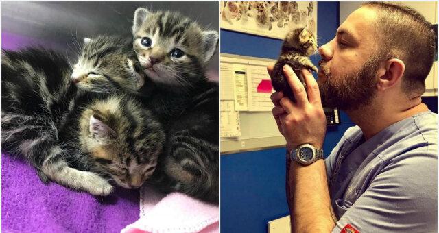 История спасения: мужчина спас трех котят, и они решили, что он их мама