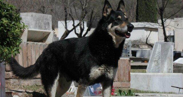 Реальний Хатіко: історія собаки, яка не покинула хазяїна