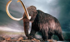 крупнейшее в истории захоронение мамонтов