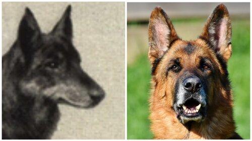 Как выглядели наши любимые собаки 100 лет назад (ФОТО)