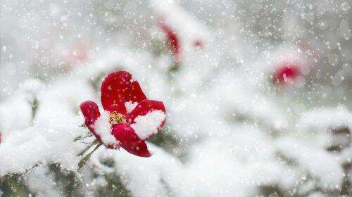 До конца месяца морозы и снег, а тепло придет не раньше мая: синоптик озвучил прогноз