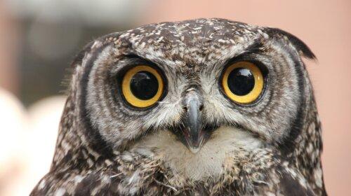 Фотограф зробив фото-головоломку з совою: а тобі слабо знайти птицю на фото?