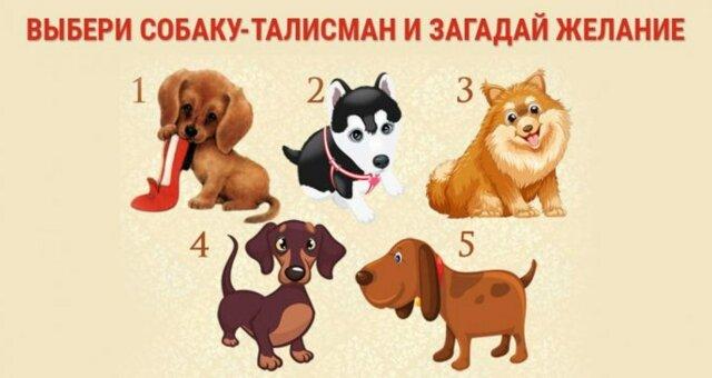 Тест-передбачення: загадай бажання, а собаки скажуть відповідь