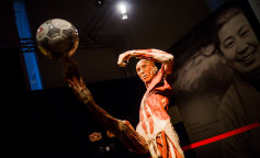 7 причин відвідати виставку Body Worlds «Всесвіт тіла»