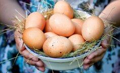 В Беларуси курица снесла самое большое яйцо в мире: фото гиганта