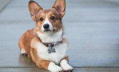 Почему стоит завести собаку: врачи рассказали о преимуществах