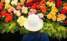 Garden Enthusiasts Flock To Hampton Court Flower Show