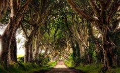 природа, природа Ирландии, красивый фото