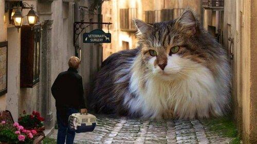 Як виглядає найбільша домашня кішка у світі
