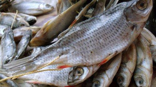 hranenie-vyalenoj-ryby