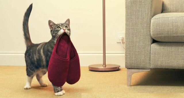породы кошек, которые поддаются дрессировке