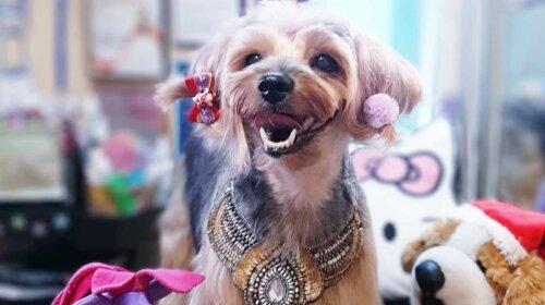 """""""Мамкины модники"""": пользователи Сети показали своих собак до и после стрижки"""