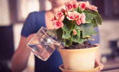 Комнатные цветы и аллергия