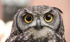Головоломка с совой взорвала Сеть: а тебе слабо найти птицу на фото?