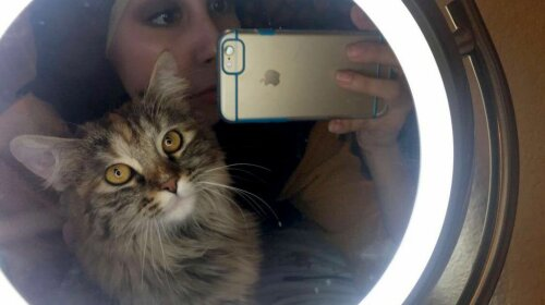Мережу насмішив кіт, який майстерно вміє закочувати очі