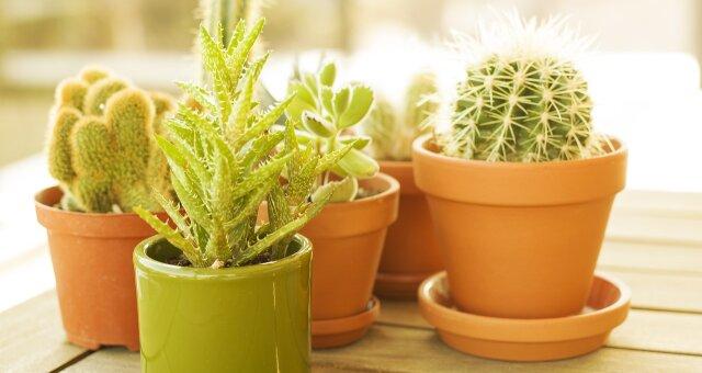 Комнатные цветы, которые очистят дом от негатива по фен-шуй