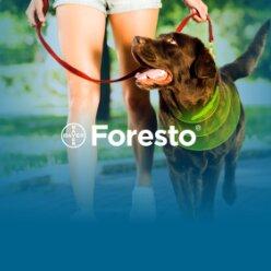 8 советов как защитить собаку от клещей и заражения бабезиозом