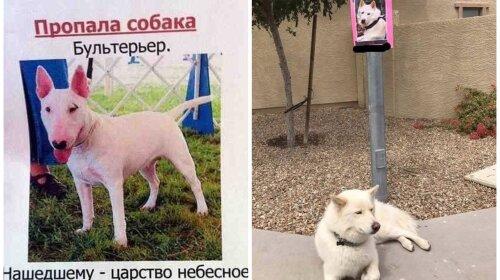 """""""Отзывается на """"Жора"""" и """"иди жрать"""": забавные объявления о пропаже животных"""