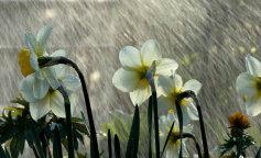 Awesome_Rainy_Wallpapers_www.laba.ws