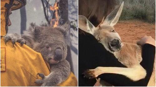 Пожежі в Австралії: виживші тварини