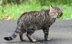 Сеть рассмешило забавное фото дворового кота (фото и видео)