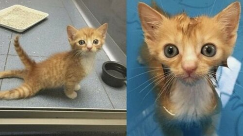 Парализованного котенка спасли неравнодушные люди