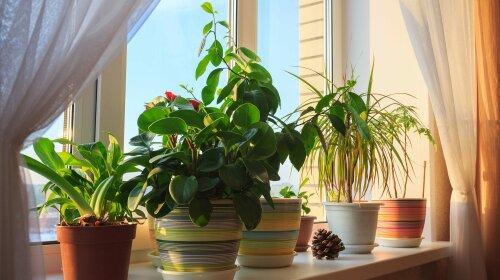 комнатные цветы, которые очищают воздух