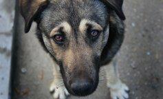 """На Багамах из руин спасли собаку, которая выжила после урагана """"Дориан"""""""